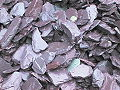 40 mm plum slate chippings